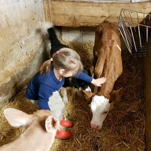 """""""Landwirtschaft in Hittisau"""" 👉 familiengeführte Bauernhöfe mit engem Bezug zu den Tieren statt ..."""