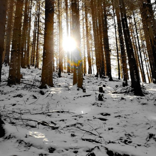 #sunshine🌞 #snow #wood #happyday #vorarlberg Fraxern