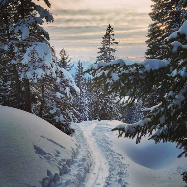 Ich genieße die Stille der Winterlandschaft ❄😊 . #vorarlberg #austria #bregenzerwald #laterns #skitouring ...