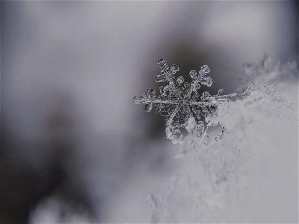 Kunstwerke der Natur – selbst im Winter ❄ #walserart #kleinwalsertal #visitaustria #visitvorarlberg #urlaubindenbergen ...