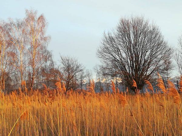 #goldenlight #sunset #hoechst #rohrspitz #vorarlberg #austria🇦🇹 #nature #ilovenature #naturephotography #nofilter #8.3.2020