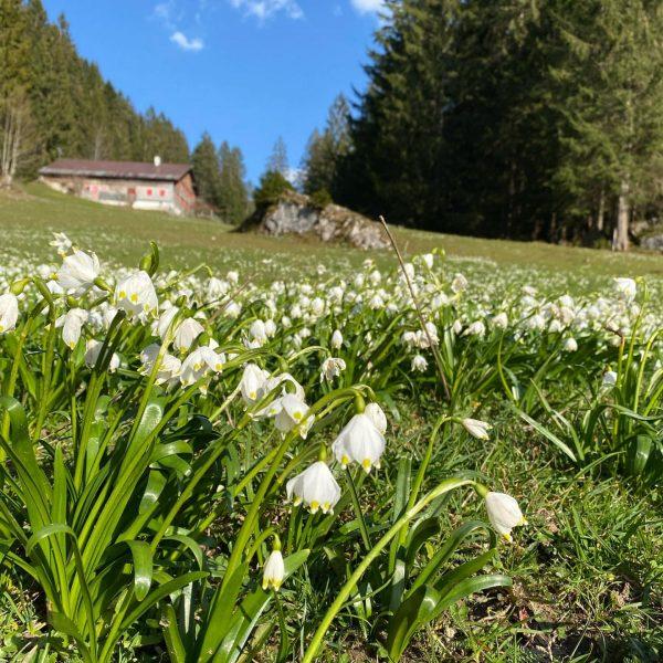 Frühlingsboten auf dem Weg zum Sonderdach ....... . . . . . . ...