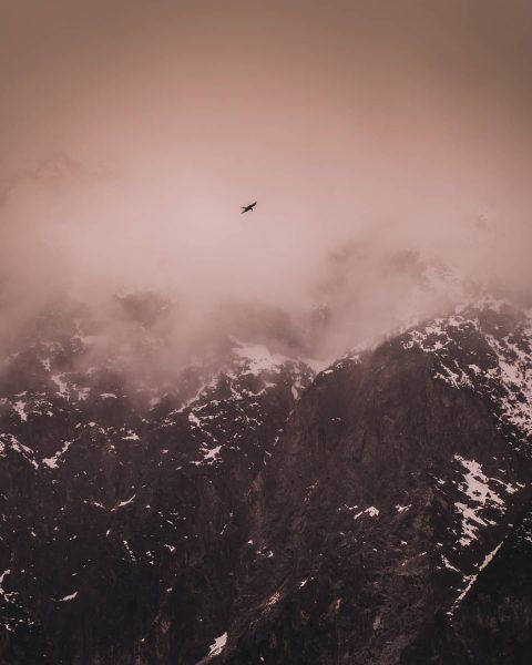 Habt ihr schon mal einen Steinadler in freier Wildbahn gesehen? • Ich auch ...