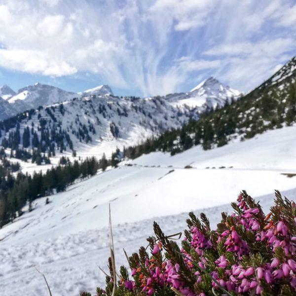 Wenn Ruhe im Skigebiet herrscht & der Frühling seine ersten Boten schickt: Unbezahlbar! ...
