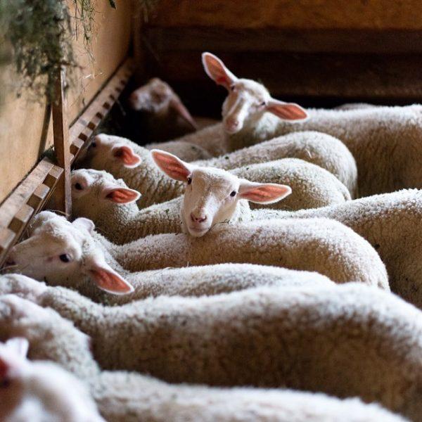 In Zeiten wie diesen sind wir besonders dankbar, mit Tieren arbeiten zu dürfen ...