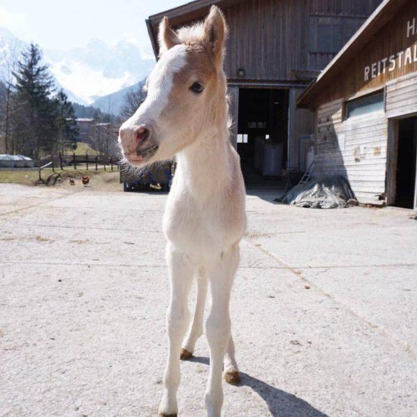 Stall-News 🐴🐮🐥 Unseren Tieren geht es bestens. Auch wir haben wieder Nachwuchs bekommen! ...