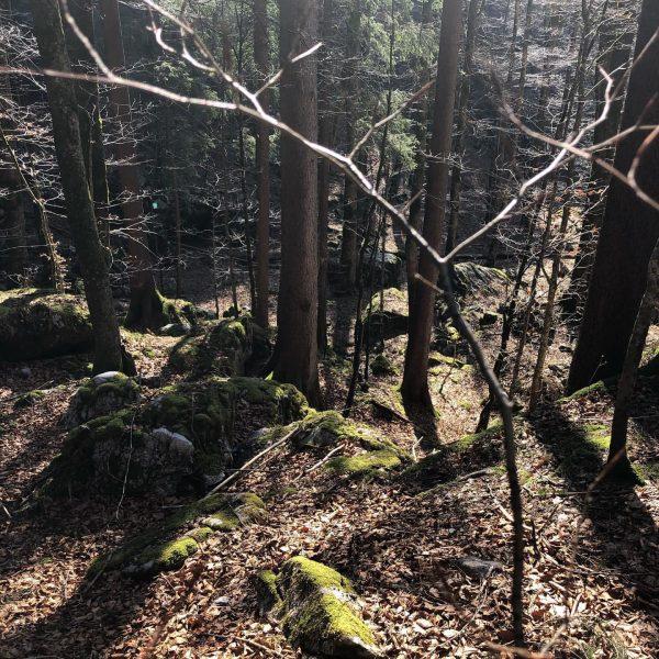 Tief durchatmen! Ruhig ist es nicht nur im Wald. Wir sehnen uns schon ...