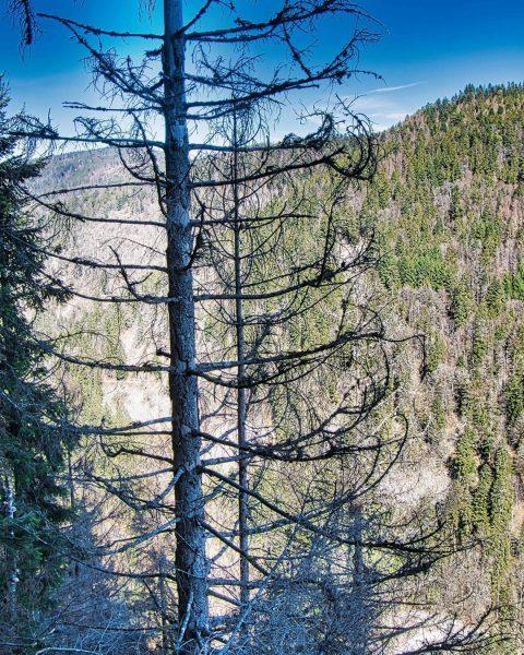 #wandertour #ausblick #bergwandern #wandertag #landscapes #landschaft #mybelleview #liebezumwandern #wanderweg #naturelovers #naturephotography #naturfotografie #wanderwege ...