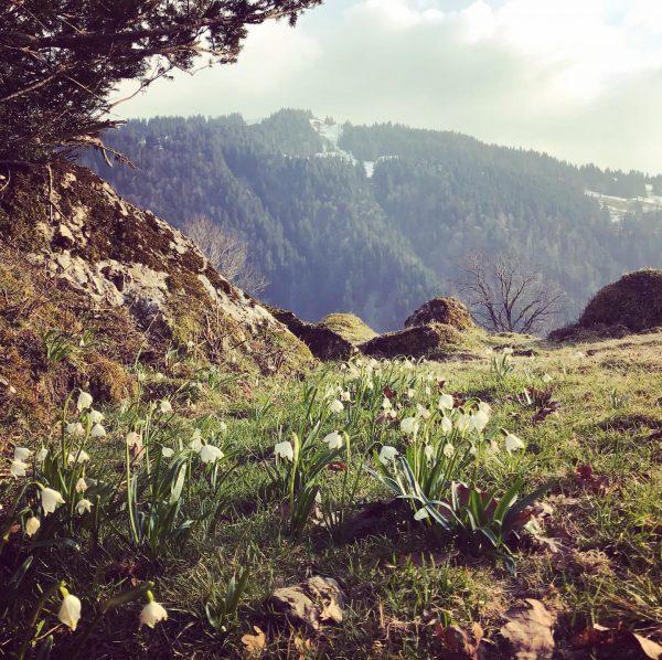 Die Märzenbecher blühen! Unsere Frühlingsblüher lesen keine Zeitung und sprießen trotzdem, wir haben ...