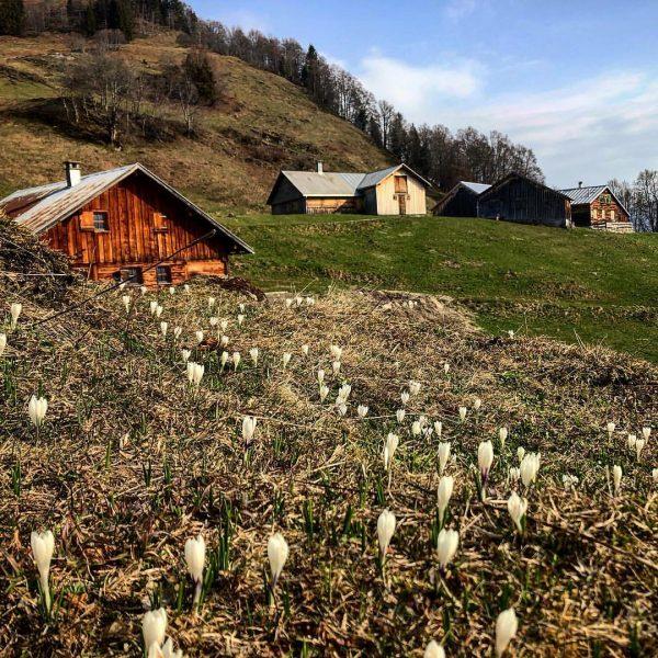 #hochvorsäß #Mellau #bregenzerwald #nature #outdoor #outdoorlife #frischluft #visitbregenzerwald #visitvorarlberg #hiking #wandern #frühling #Ersteblumen