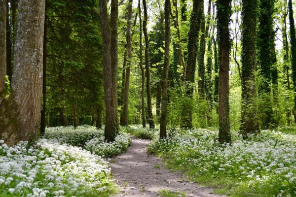 🌿🌿🌿 . . . #vorarlberg #visitvorarlberg #rheindelta #gaissau #austria #nature #naturephotography Rheinholz Gaißau