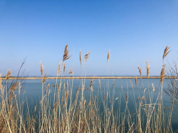 Can you hear the wind blowing through those reeds at Lake Constance? 🌾☀️ ...