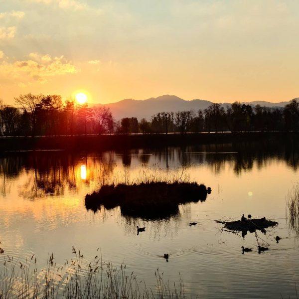 Power of the nature 🌅 📍 Alter Rhein, Hohenems . . . . ...