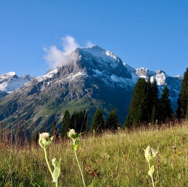 Welcome Spring #vorarlberg #arlberg #ravel #spring #lech #oberlech #alps #snowcappedmountains #amazingview #landscapephotography #hiking ...