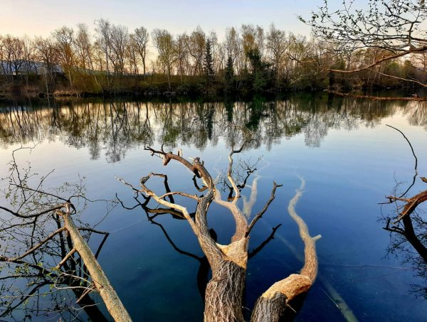 Hier ein besonders fotogenes Exemplar eines umgestürzten Baumes! Euch allen einen schönen Abend! ...