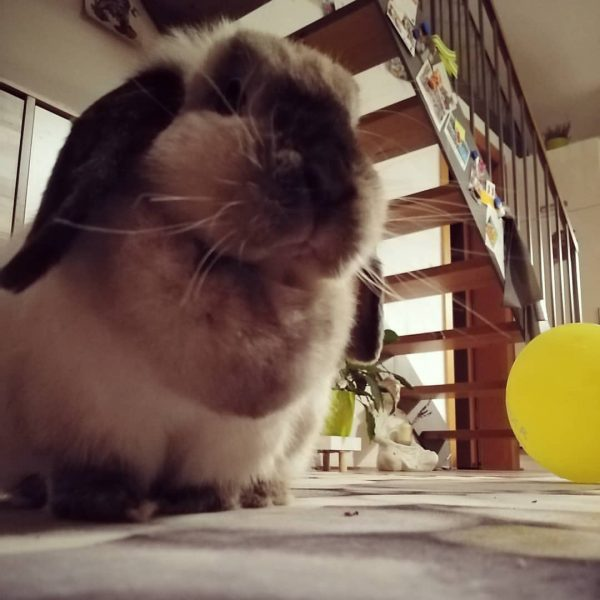 #bregenzerwald #home #stayhome #bunnylove #bunnylife #babybunny #bunnyoftheday #sunnythebunny Egg, Austria