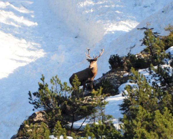 Namiddag in Mittelberg. #wild #wildlife #hert #Hirsch #Kleinwalsertal #Oostenrijk #Vorarlberg #Austria #mountains