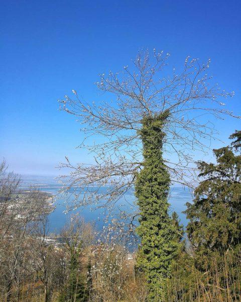 #frühling 😍 . . . . #landschaft #landscape #wandern #hiking #berge #mountains #tree ...