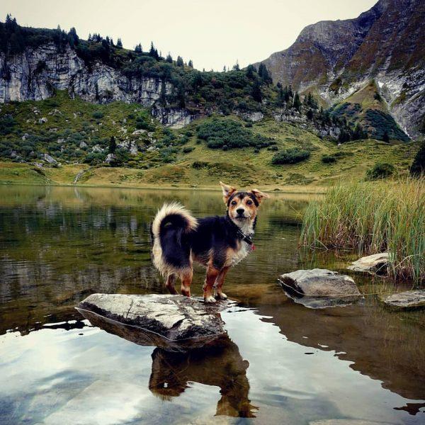 LoVe #throwback #lovemydog #wanderlust #körbersee #hundeliebe #dogsofinstagram Körbersee