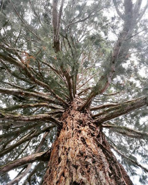 #nature #tree #mehrerau #bregenz #vorarlberg #finchandfoxes