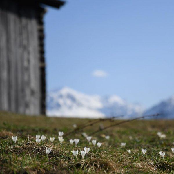 An diesem ungewöhnlichen Osterfest lernen wir den Wert der Montafoner Kultur- und Naturlandschaften ...