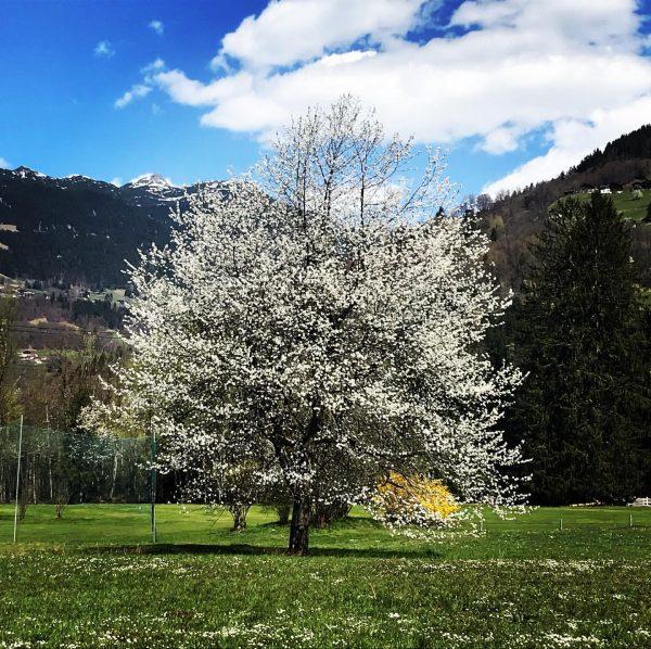 Die Natur lebt... #wunderschön #amazing #frühling #spring #leben #life #sonne #sun #sunshine #heimat ...