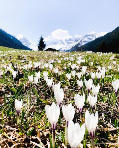 Weiß, weißer, am weißesten.... #montafon #meinmontafon #berge #bergliebe #dahem #aplen #draussen #gauertal #dreitürme ...