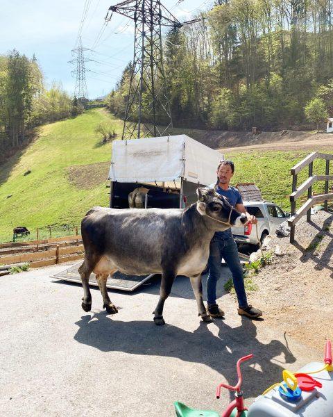 Neuzugang am Kristahof! 💓-lich Willkommen Liesel und Larissa 🐮 die zwei Tirolerinnen sind ...