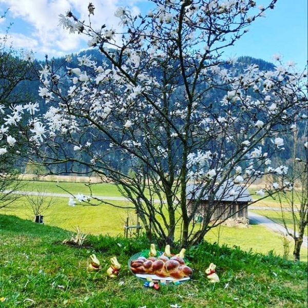 Habt ihr schon alle euer Osternest gefunden? #ostern #osterhase #osternest #happyeaster #frühling #bregenzerwald ...