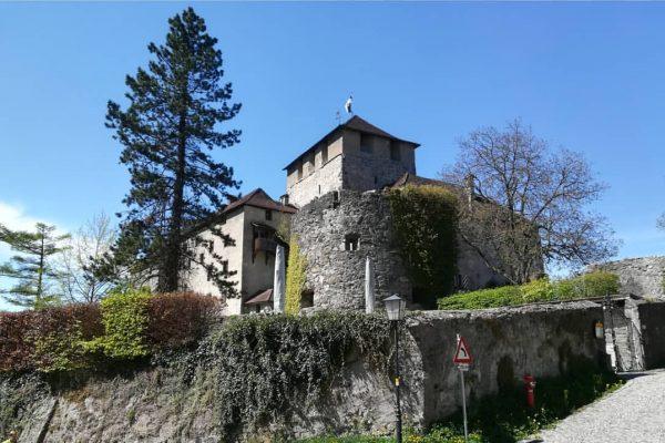Mut gibt uns das wunderbare Frühlingswetter. Die Natur zeigt uns, es geht aufwärts. 😊🌄 #schattenburgmuseum #schattenburgfeldkirch #schauaufdichschauaufmich...