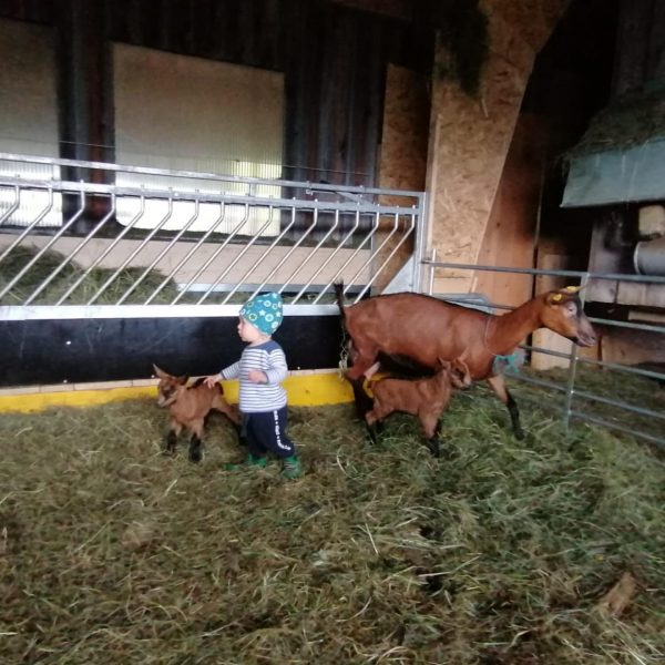 """""""Landwirtschaft in Hittisau"""" 👉 Wissen, wo's herkommt! Hier ein paar Bilder aus dem ..."""