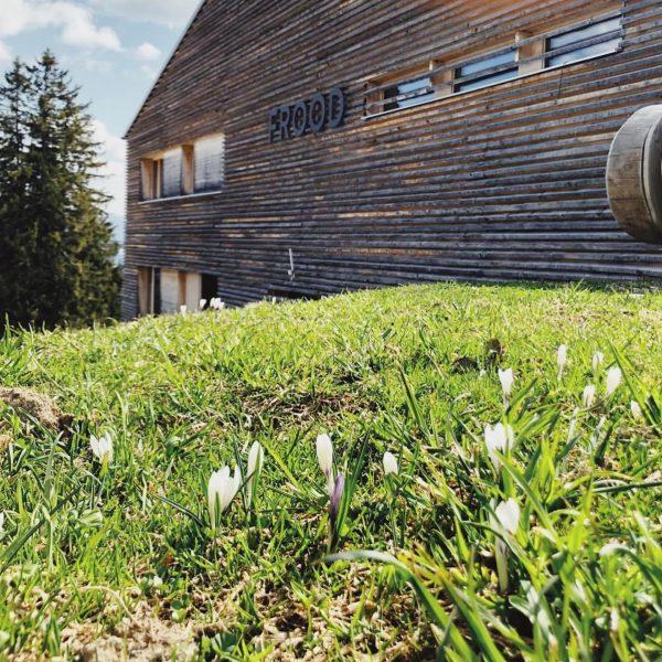 FRÖÖDIGER FRÜHLING 😀 Am Burtschasattel kommen die Krokusse 💛 Schönes Wochenende und bleibt ...