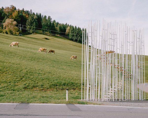 Cows wait for no Bus. @sou_fujimoto 2014 Krumbach, Vorarlberg