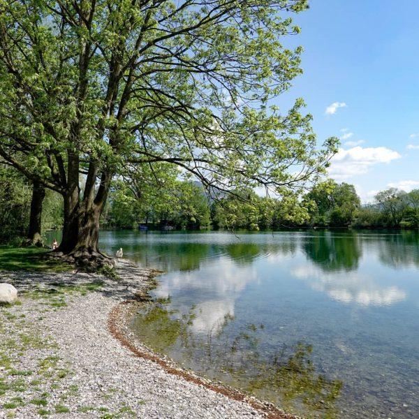 #jannersee #lauterach #visitvorarlberg #visitaustria #weloveaustria #einfachschön #see #lake #frischeluft #schwan #natur #nature #naturfotografie ...