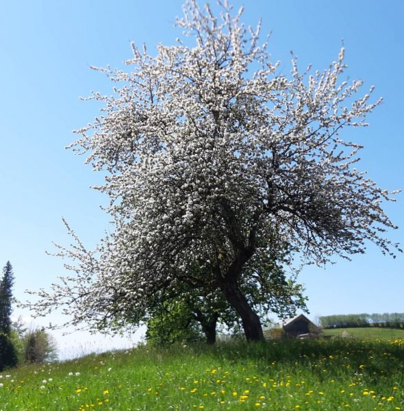 #visitvorarlberg #bildstein #vorarlberg #austria_official #austriagram #austria_pictures #ww_natura #ww_nature_landscapes #natura #natureyourebeautiful #nature_lovers #naturephotography #nature_perfection ...