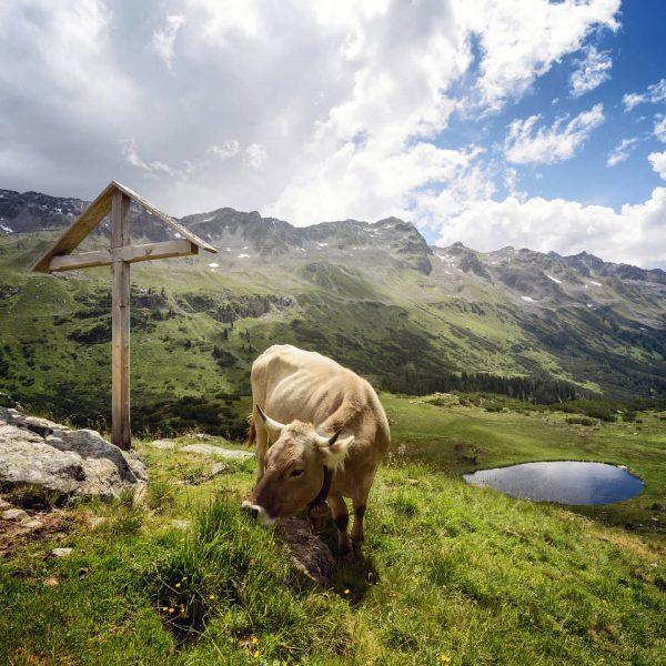 Da freut sich bestimmt noch jemand auf den Sommer in den Bergen. 😉🐮 ...