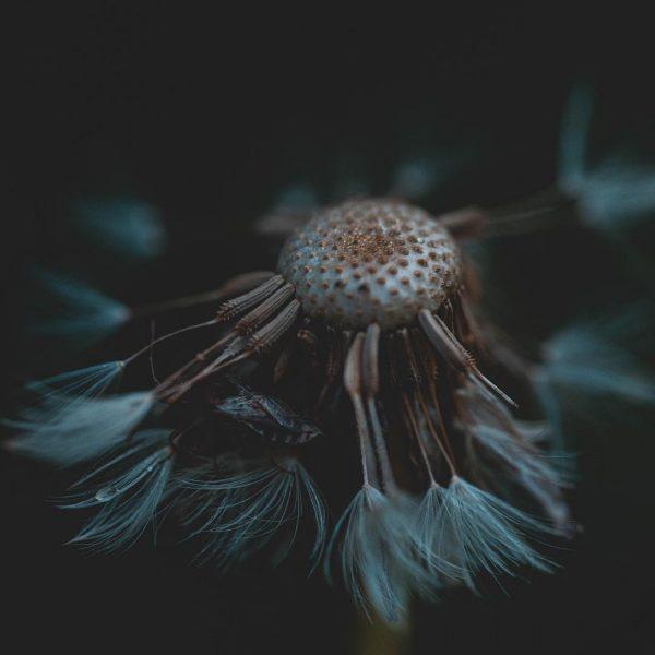 #macro #landschaftsfotografie #nature #naturelover #naturefotography #sonyalpha7ii #sonyalphaphotography #sigma #nikondeutschland #makrofotografie #langzeitbelichtung #macro_love #outdoorphotography ...