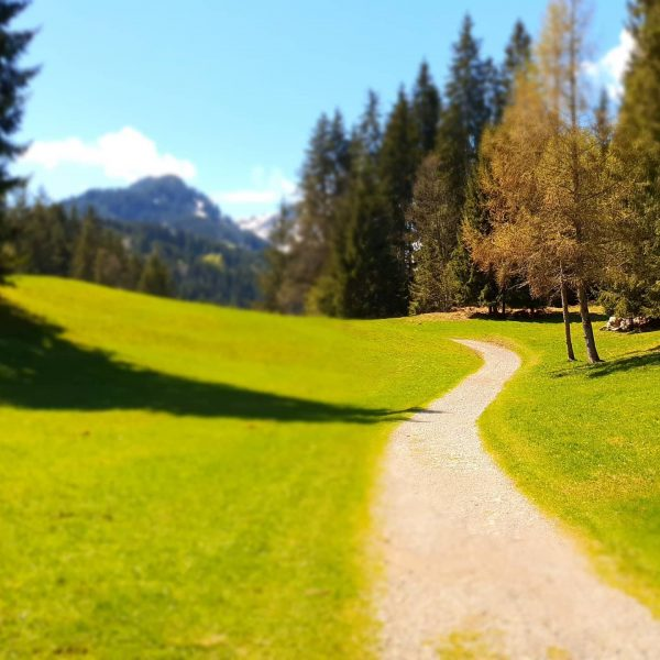 Die #kanzelwandbahn und die #fellhornbahn starten am Samstag (30.5.) in die #sommersaison .... als unsere Gäste können...