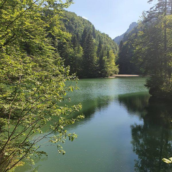 #vorarlberg #schönertag #wohnenwoandereurlaubmachen #ländleliebe #rappenlochschlucht #staufensee Staufensee