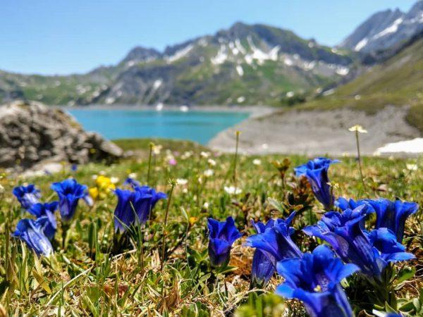 Bergfrühling - love it. Und noch schöner ist es, wenn man die wichtigsten ...