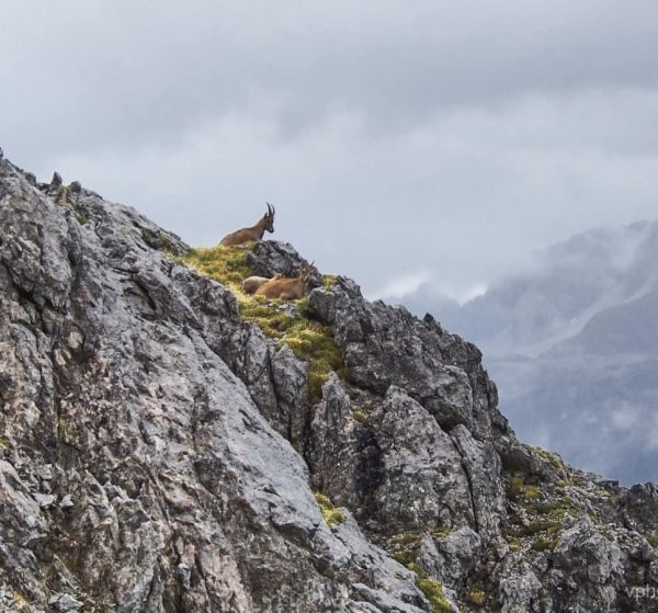 #lechquellengebirge #vorarlberg #wanderlust #alpen #alpscape #alps #göppingerhütte #picturetokeepnature #visitmountain Lechquellengebirge