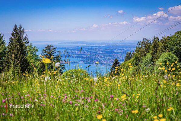 Weit.Blick. ☀️🌼⛰🇦🇹🇩🇪🇪🇺 | #lakeofconstance #bregenz #lindau #lochau #venividivorarlberg #sommer #goodvibes #niceview #unservorarlberg #wirliebenvorarlberg ...