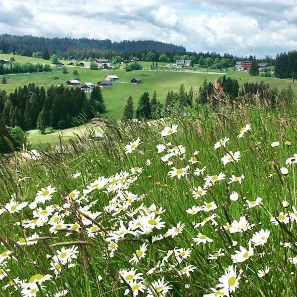 Ich kam. Ich sah. Auf's Bödele. #venividivorarlberg #bödele #schwarzenberg #visitbregenzerwald #visitvorarlberg #waelderhausapartments #urlaub ...