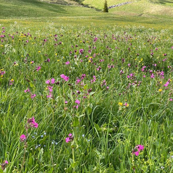 Spring Walk around beautiful Lech/Zug am Arlberg #lech #zugamarlberg #rotewandstuben #rotewandchefstable #summerinzug #venividivorarlberg ...