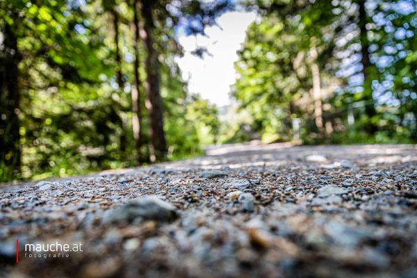 Step by Step. ⛰☀️🌱 | #venividivorarlberg #ländle #sommer #dornbirn #vorarlberg #ländle #wirliebenvorarlberg #unservorarlberg #karrendornbirn #karren #canon5dmarkiv #canonaustria...