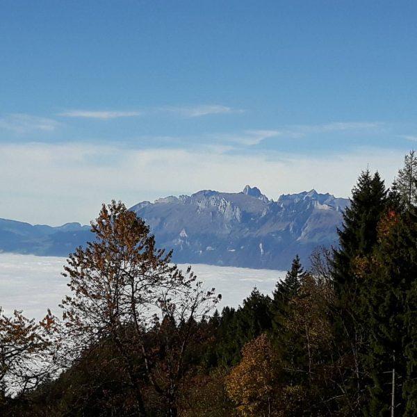 Nebelmeer mit Säntisblick Alpwegkopfhaus