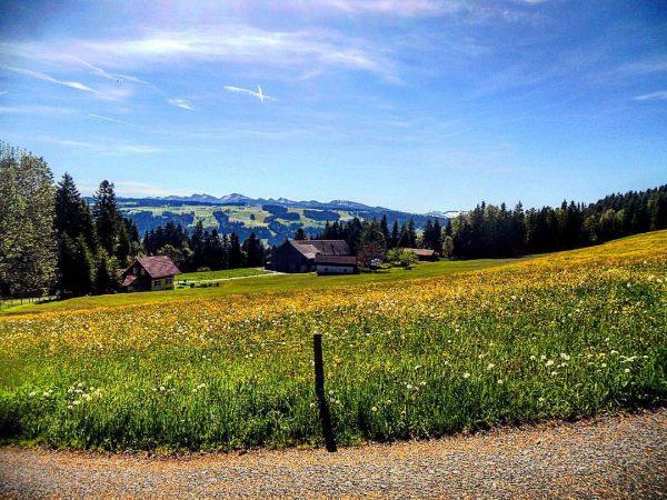 #throwback #Frühling im #Allgäu . #allgäueralpen #nagelfluhkette #Bregenzerwald #alpen #alps #bavaria #austria #wandern ...