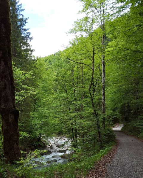 Bu güzel yolda yürünmez mi? #meinvorarlberg #vorarlberg #visitvorarlberg #österreich #discoveraustria #ig_austria #365austria Saminatal