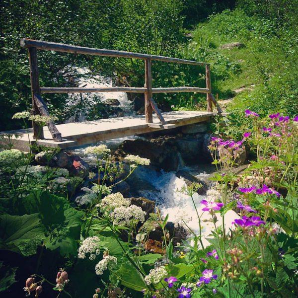 Bergsommer #gargellen #gargellenerleben #traumtrail #Trail #trailrunning #hiking #hikingtrail #ronggalpe #vorarlberg #österreich #geocache #geocaching ...