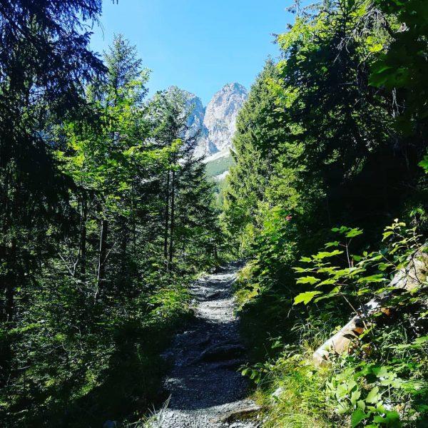 Zur Sattelalpe #hiking #mountain #sattelalpe #vorarlberg #hoheköpfe Gurtisspitze